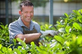 Professioni come diventare un giardiniere for Donare un giardiniere