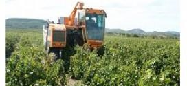 Come avviare una coltivazione di canapa
