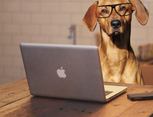 Come intraprendere nel pet business